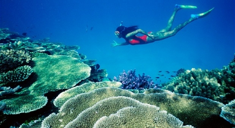 Option 2: Snorkeling & Fishing in the North Island (8:00am – 15:30pm) (350.000VND/Pax)